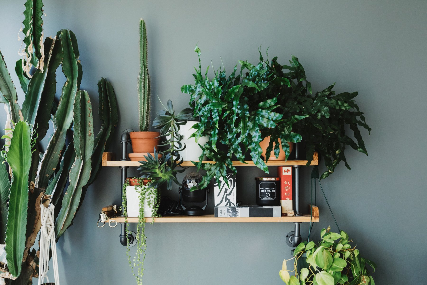 Fronds with Benefits: A Beginner's Guide to Selling Plants Online